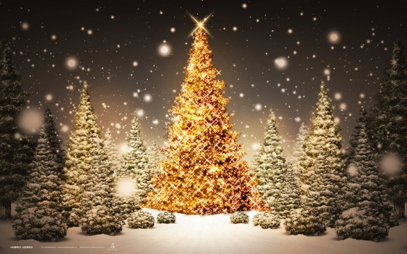 beautiful-christmas-trees